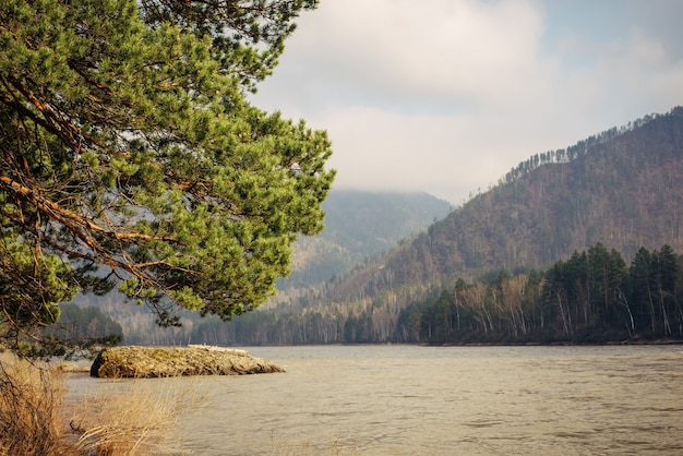 Stunning view of mountain river, hills covered with coniferous forest on sunny spring day. in the foreground, a lush green pine branch leans toward the water. natural background.