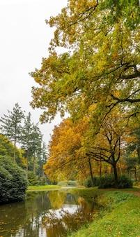 涼しい日に公園の湖と背の高い木々の見事な景色
