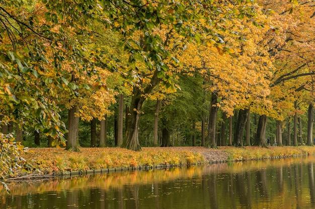 明るい日に湖と木々がある静かな公園の素晴らしい景色