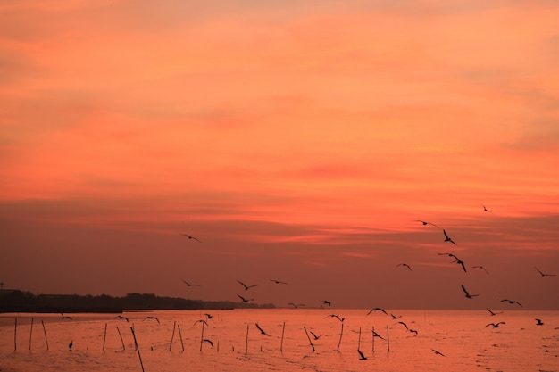 Stunning vivid orange color sunrise sky with uncountable early birds flying over the calm sea