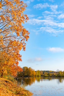 Stunningly beautiful autumn forest and reflection in the river. autumn concept yellow leaves and bright blue sky.
