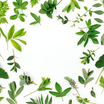 스타일된 녹색 잎 프레임입니다. 다양한 숲 잔디와 흰색 배경에 나뭇잎.