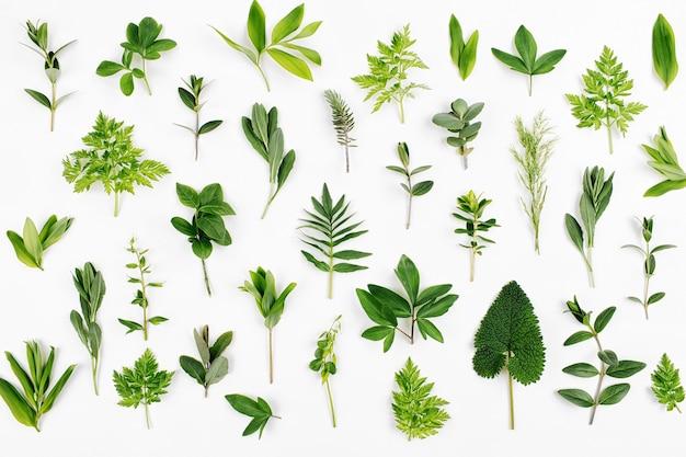 스타일된 녹색 잎 패턴입니다. 다양한 숲 잔디와 흰색 배경에 나뭇잎.