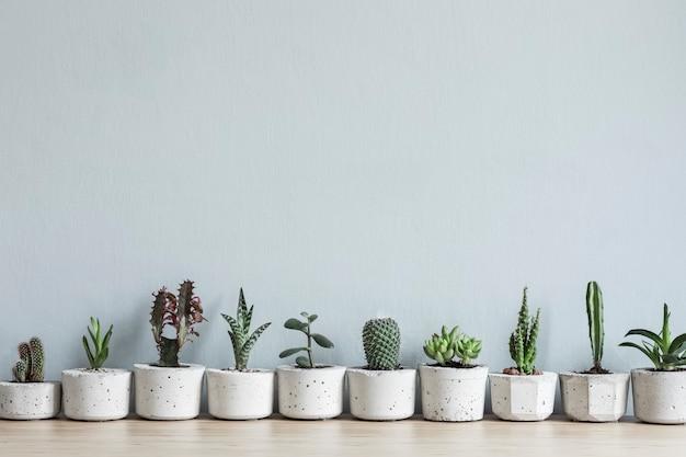 Стильная и ботаническая композиция домашнего интерьера сада заполнила множество растений в бетонных горшках разного дизайна на столе