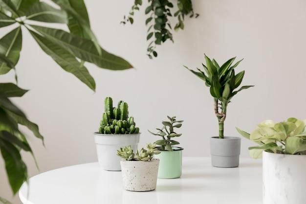 ホーム インテリア ガーデンのスタイリッシュで植物学的な構成は、さまざまなデザインの植物、白いテーブルの上のエレガントな鉢植えでいっぱいです。緑のほうがいいです。春の花。