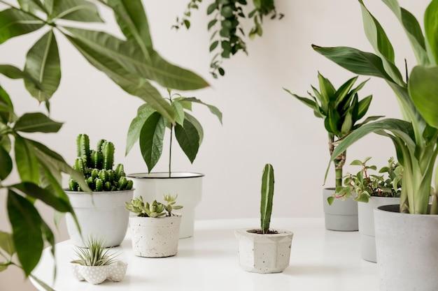 가정 인테리어 정원의 세련되고 식물학 구성은 흰색 테이블에 다른 디자인, 우아한 냄비에 많은 식물을 채웠습니다. 녹색이 더 좋습니다. 봄 꽃.