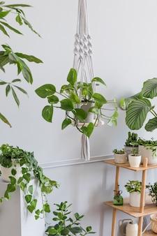 나무 선반, 디자인 및 우아한 액세서리, 손으로 만든 마크라메 선반 화분 걸이가있는 거실의 세련되고 미니멀 한 보헤미안 인테리어. 식물이 많은 식물학 및 가정 장식.