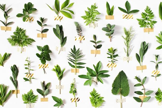 スタイリッシュな植物の背景金の和紙テープでさまざまな森の草や葉