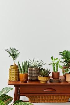 家の庭のインテリアのスタイリッシュな構成は、さまざまなデザインの鉢にたくさんの美しい植物、サボテン、多肉植物、空気植物を満たしました。ホームガーデニングのコンセプトホームジャングル。 spcaeをコピーします。テンプレート