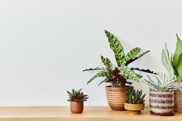 가정 정원 인테리어의 세련된 구성은 다른 디자인 냄비에 아름다운 식물, 선인장, 다육 식물, 공기 식물을 많이 채웠습니다. 홈 원예 개념 홈 정글. spcae를 복사합니다.