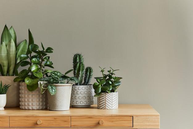 Стильная композиция домашнего сада наполнена множеством красивых растений, кактусов, суккулентов, воздушных растений в горшках разного дизайна. концепция домашнего садоводства домашние джунгли.