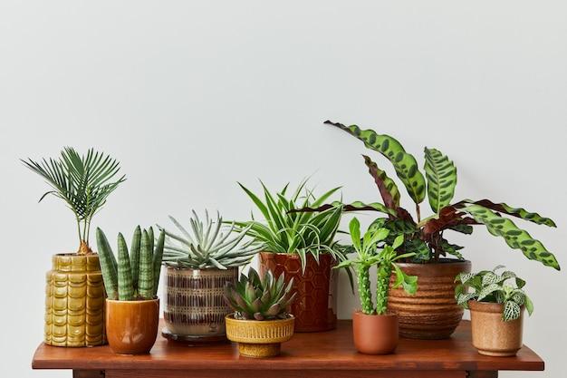 가정 정원 인테리어의 세련된 구성은 다른 디자인 냄비에 아름다운 식물, 선인장, 다육 식물, 공기 식물을 많이 채웠습니다. 홈 원예 개념 홈 정글.