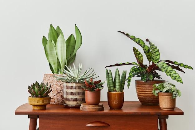 홈 가든 인테리어의 세련된 구성은 다양한 디자인 화분에 아름다운 식물, 선인장, 다육식물, 공기 식물을 많이 채웠습니다.