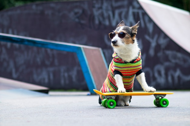Stylish dog on the ramp, riding a penny board outside. a pet is riding a skateboard or longboard on the playground