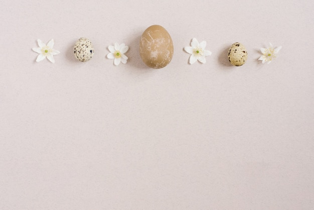 Stylish easter flat lay. quail eggs on a beige background with spring white flowers. happy easter greeting card. copy space