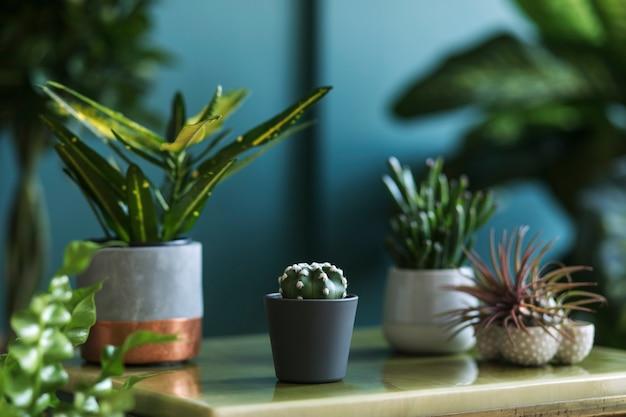 아름다운 식물, 선인장, 다육식물이 있는 세련된 꽃 구성과 대리석 커피 테이블에 있는 힙스터 냄비. 내츄럴한 거실. 녹색 벽입니다. 가정 원예 개념입니다. 주형.