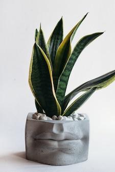 Стильные вазоны с зелеными растениями. домашнего декора.