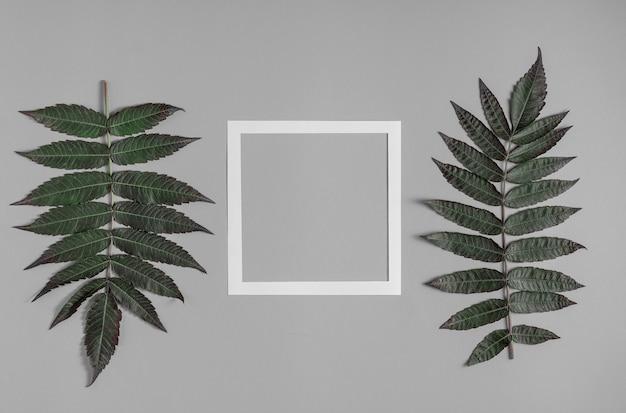 白いフレームと葉のある2つの枝を持つスタイリッシュな灰色の背景。フラットレイ構成。