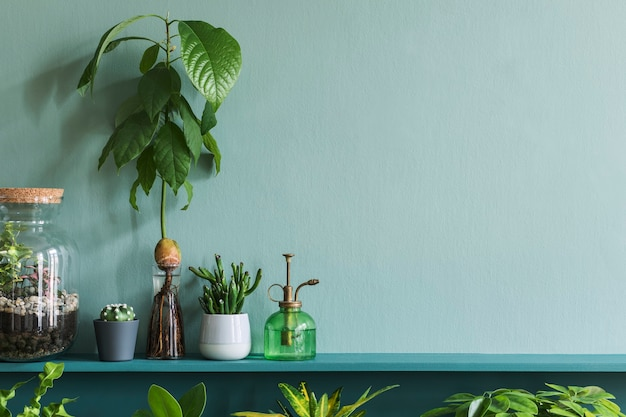 Stylish living room interior with beautiful plants in differents hipster and design pots on the green shelf. green wall. modern and floral concept of home garden jungle. copy space.