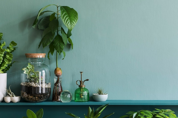 Differents hipster의 아름다운 식물과 녹색 선반에 디자인 냄비가있는 세련된 거실 인테리어. 녹색 벽. 집 정원 정글의 현대적이 고 ..