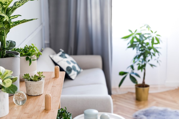 Stylish and minimalistic boho interior of living room with wooden shelf, grey sofa, design and elegant accessories, hand made macrame shelf planter hanger. botany and home decor with a lot of plants.