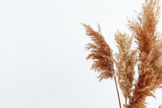 베이지색 가을 마른 꽃, 가을 컨셉이 있는 세련된 모형. 최소한의 가정 정물 배경입니다.