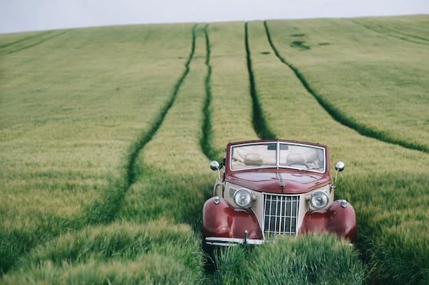 Stylish retro car in a green field