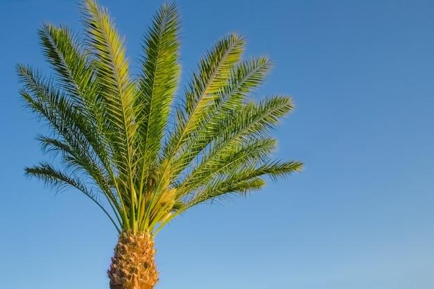 Стильный силуэт пальмы на фоне неба