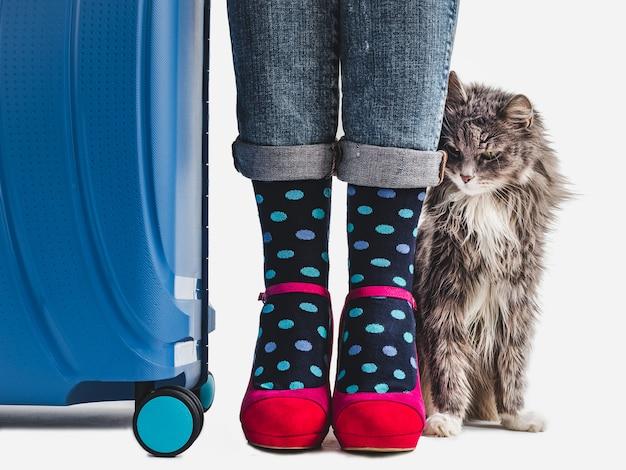 Stylish suitcase, women's legs and gentle kitten