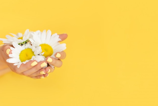 Stylish trendy female manicure. daisy flower in hand with a beautiful manicure.