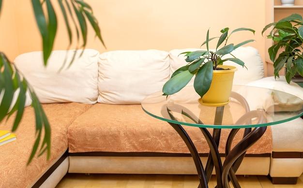 코너 소파와 녹색의 다른 집 식물이있는 세련된 트렌디 한 가정 실제 인테리어. 가정 아늑한 장식, 가정 정원.