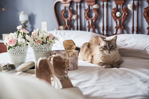 Stylish white wedding bridal shoes, perfume, flowers, jewelry and cat on a bed.