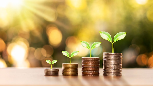 Successful finance and investment concept with trees growing on coins and blurred green nature background.