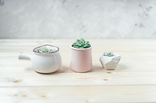 木製のテーブルの上に一列に並んだコンクリートの鉢に多肉植物とサボテン