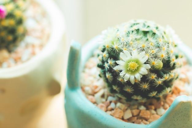 Succulent baby cactus close up thorns
