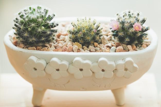 Succulent cactus in a ceramic pot