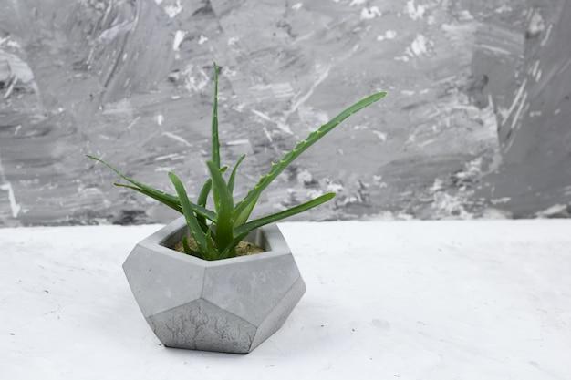 Succulent concrete modern pot concrete wall for background