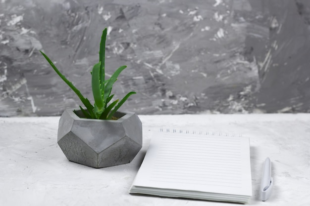 Succulent in a concrete pot and opened notebook with empty sheet