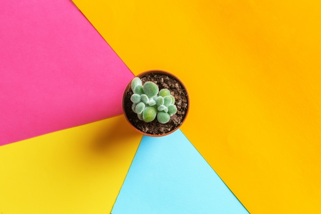 Succulent flower on bright colored background.