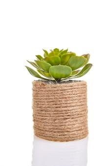 分離された生態学的に純粋な材料で作られた装飾的な円筒形の鍋に多肉植物の花。