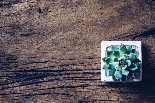 Succulent in flower pot on wooden background