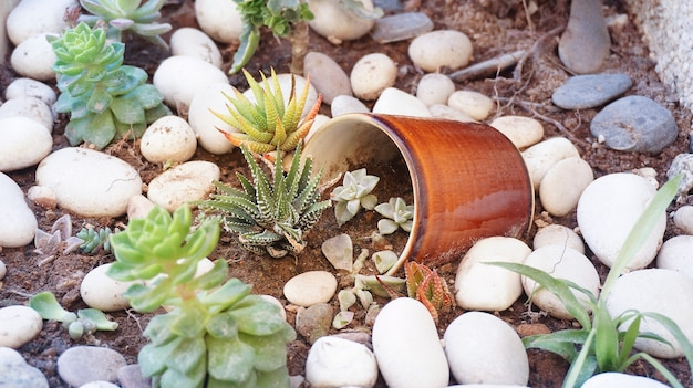 깨진 세라믹 컵으로 즙이 많은 꽃 작은 식물 정원 장식