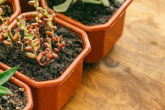 Succulent flowering house plants.