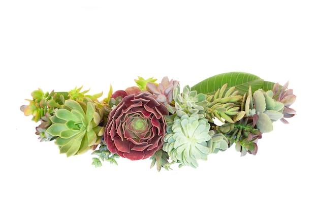 Граница сочных свежих растений, изолированные на белом фоне