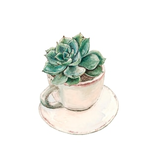 Succulent grows in a tea cup with a saucer
