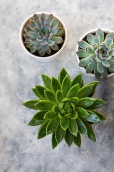 Сочные комнатные растения в горшках
