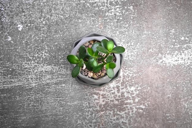灰色のコンクリート表面のモダンなポットで多肉植物