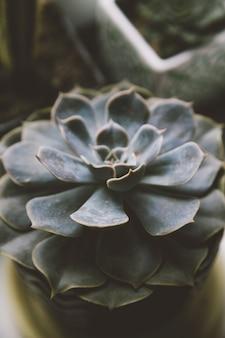 아늑한 집 꽃의 배경 개념에 즙이 많은
