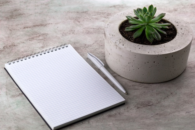 Succulent and open notebook marble background