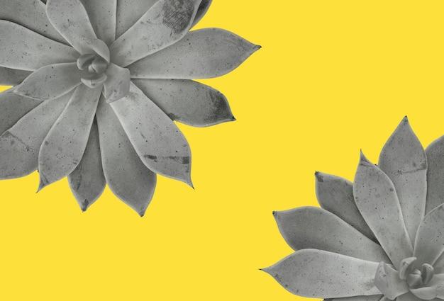 多肉植物の背景。 2021年の色の観葉植物。究極の灰色と明るい黄色。